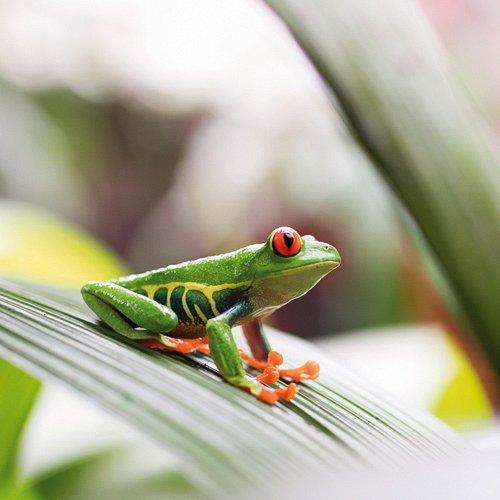 Bild zum Weblog Tierische Begegnungen  in Costa Rica